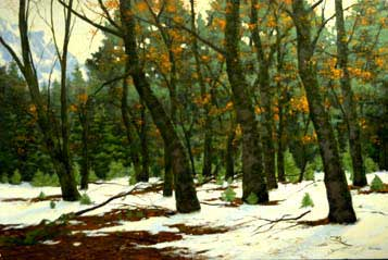 Yosemite,  Black Oaks