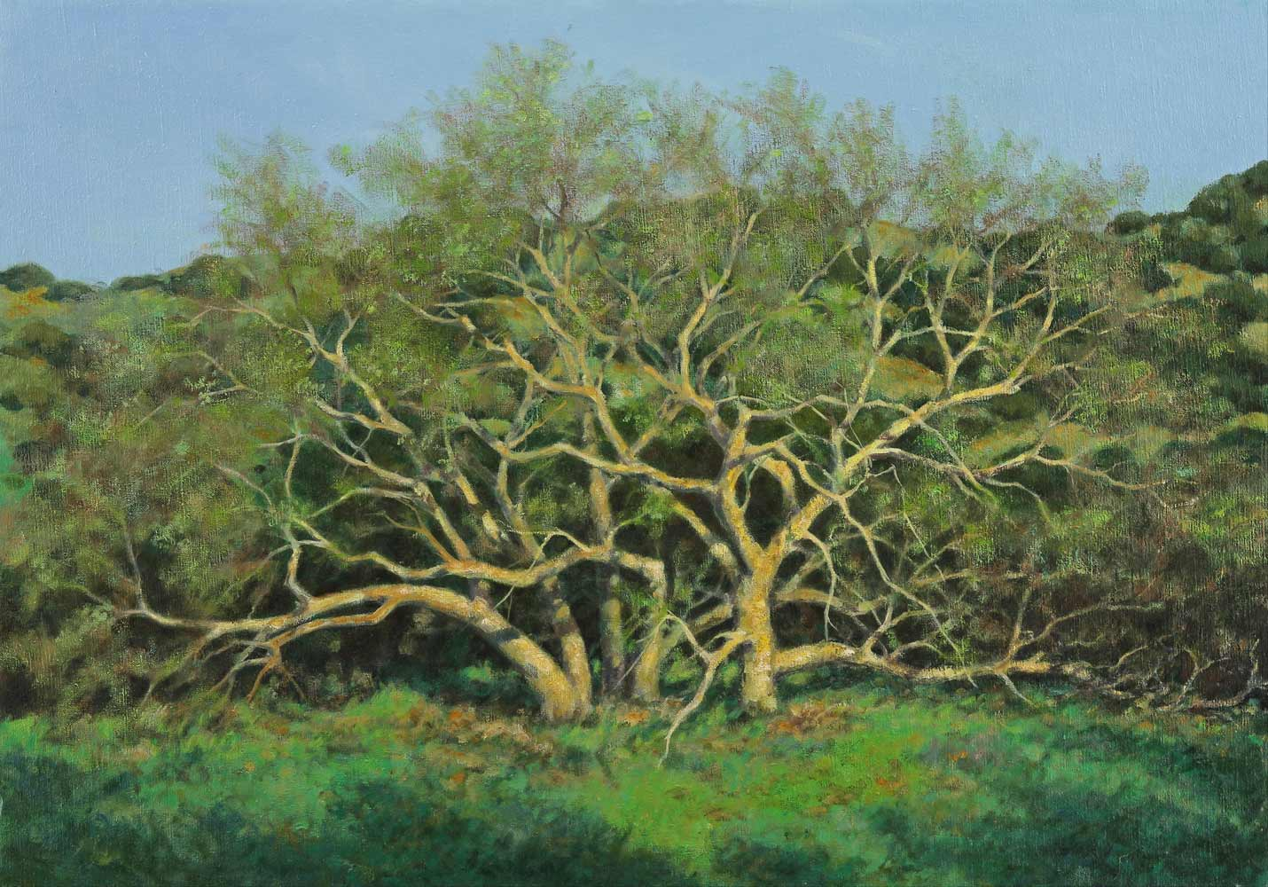 Budding Sycamores, painting by Jim Promessi